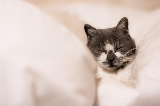 羽毛布団で寝る